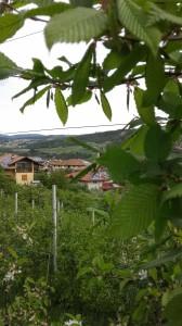 SUCCESSIVA - Monsorno Stefano - Varena - TN